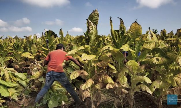 La ONU evaluará la situación de los trabajadores migratorios en Honduras y Nicaragua